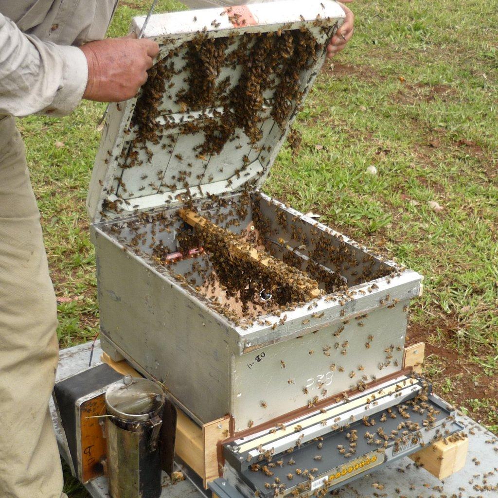 BeesInTrial1.jpg